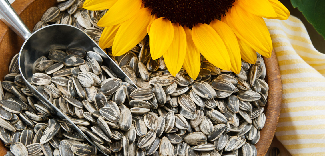 Sunflower Seeds for Everyone